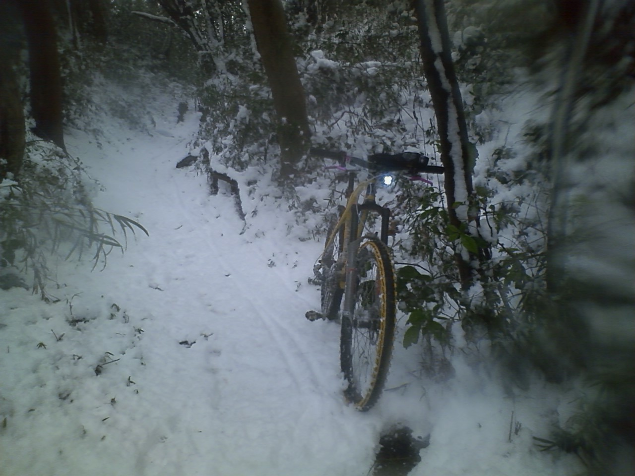 本年初は雪